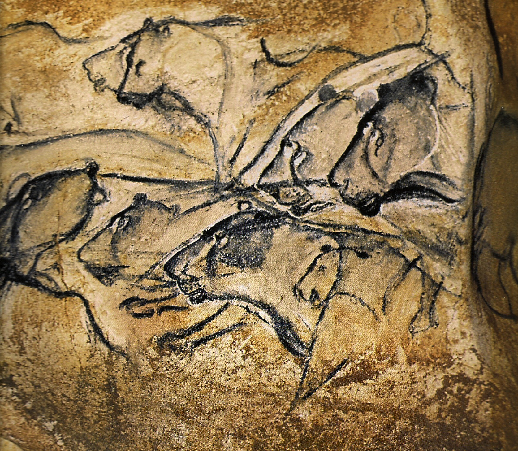 Lion Man Cave Art : Robbservations cave paintings of chauvet