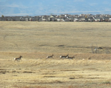 Aurora, Colorado where the high plains meets suburbia, Rocky Mountains in the back ground. Photo taken from Aurora Praire Walk on November 6, 2011
