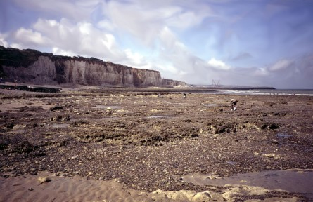 "The ""churt"" (another name for flint) filled beach at Dieppe. The scene in the picture, a peaceful morning in late July 1989, Molly Prince in the foreground, Nancy Fey walking behind. They are looking for mussels. This is essentially the same place where the Royal Regiment of Canada landed on August 19, 1942 and were summarily slaughtered by machine fire coming from Nazi defenses on the chalk cliffs above"