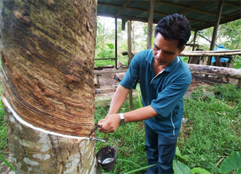 Malaysian Rubber Tapper. Today, nearly 50% of all natural rubber comes from plantations in Southeast Asia, Thailand, Indonesia, Malaysia, India and Vietnam