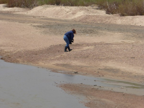 Woman looking for petrified wood along the South Platte River at Ft. Morgan. (She told us that she finds a fair amount)