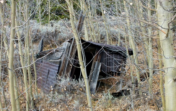 """Finntown"" remains; possibly what was a sauna, a part of the small community of Finnish miners who lived among the Aspens by the Emmet mine in the 1880s, 1890s"