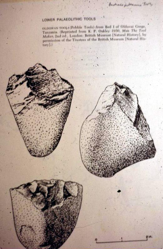 Australopithecus Tools